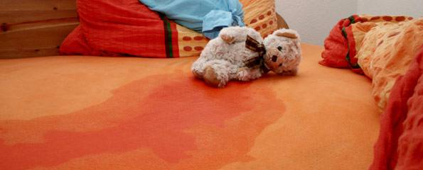Dog Wets The Bed At Night